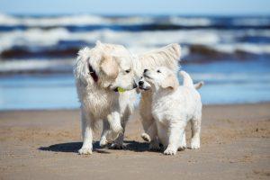 Pet Friendly Lodging Cannon Beach, Oregon
