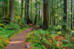 Winter Hiking on the Oregon Coast