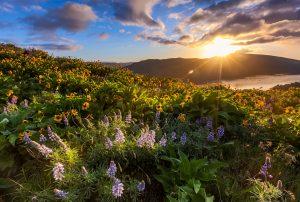 Spring Wildflowers on the Oregon Coast
