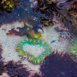 Colorful Cannon Beach Tidepools