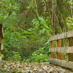 Hiking Trails around Arch Cape Inn